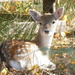 Doe a Deer by carole_sandford