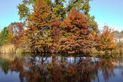 5th Nov 2016 - Autumn Pond