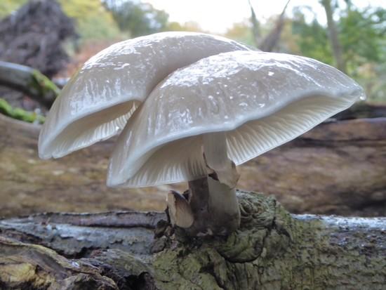 Fungi by chris17