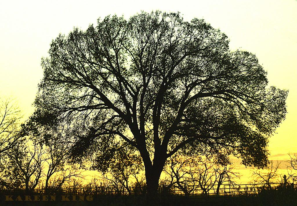 Tree 11-5-16 by kareenking