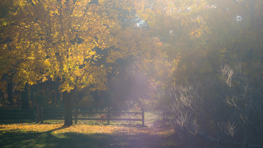 autumn light by northy
