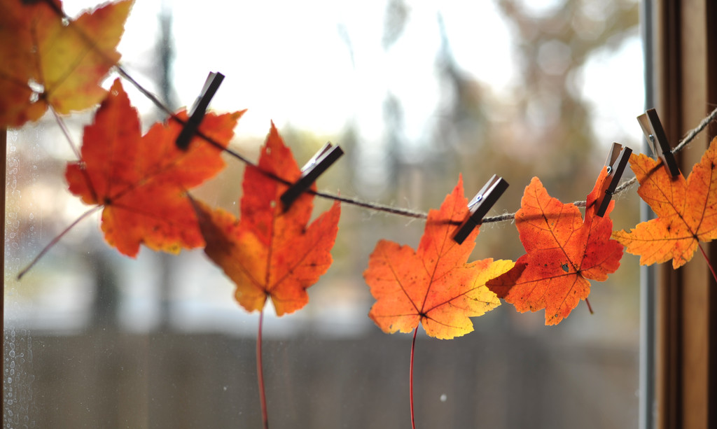 Autumn Treasures by loweygrace