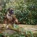 Dog on a log ... again by francoise