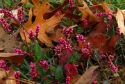 6th Nov 2016 - Fall Color Out of the Ordinary