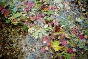 7th Nov 2016 - colours of autumn