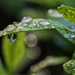 Drips and droplets by evalieutionspics