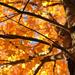 Golden Autumn by loweygrace