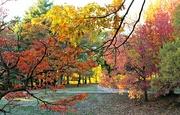 7th Nov 2016 - November Colors in the Park