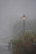 7th Nov 2016 - Misty morning