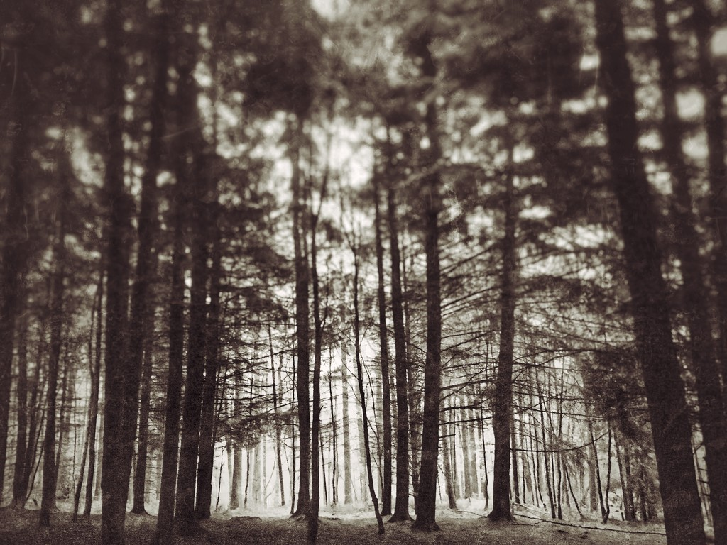 Trees by rachelwithey