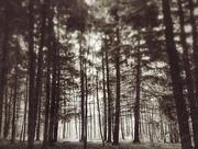 6th Nov 2016 - Trees