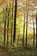 7th Nov 2016 - Queen's Wood