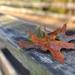 Autumn Oaks by loweygrace