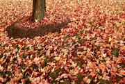 7th Nov 2016 - Autumnal Abundance