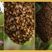 Clover Honey coming up.... by julzmaioro