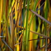 Colour in the marsh by jayberg