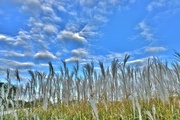 3rd Oct 2016 - fluffy clouds and grass