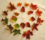 10th Nov 2016 - Colors of Autumn Revisited