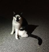 10th Nov 2016 - Feral cat