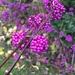 My fav plant! by cocobella