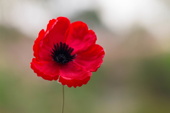 Remembrance Day  by jodies