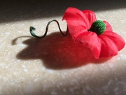 11th Nov 2016 - Veterans Day