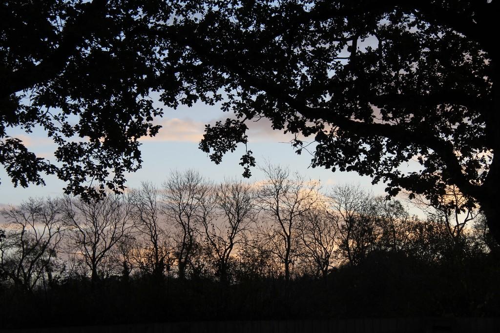 Evening by daffodill