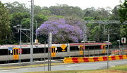 12th Nov 2016 - Train passing through Woombye