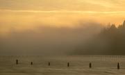 11th Nov 2016 - Pilings In Foggy Dawn