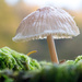 fencepost fungi by callymazoo