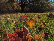 12th Nov 2016 - Autumn Grass