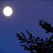 a thinking-of-ann moon shot