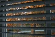 13th Nov 2016 - Tree through the window
