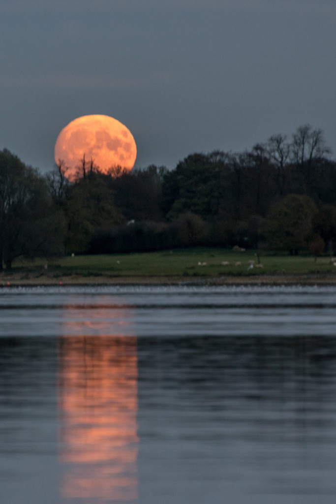 Moon rising  by rjb71