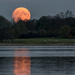 Moon rising  on 365 Project