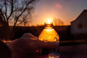 13th Nov 2016 - Bottle of liquid sunshine