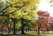 12th Nov 2016 - Boston Common, Oldest Public Park in America