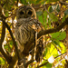 My Owl is Back! by rickster549