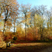 Perfect Autumn Spot by bulldog