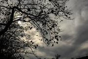14th Nov 2016 - Dreary Autumn
