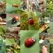 Ladybugs 2016 by cjwhite
