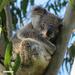 hard pillow by koalagardens