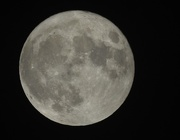 14th Nov 2016 - The Perigee Syzygy moon