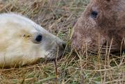 14th Nov 2016 - Mum and Pup