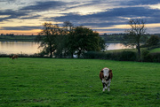 16th Nov 2016 - Cow and clouds