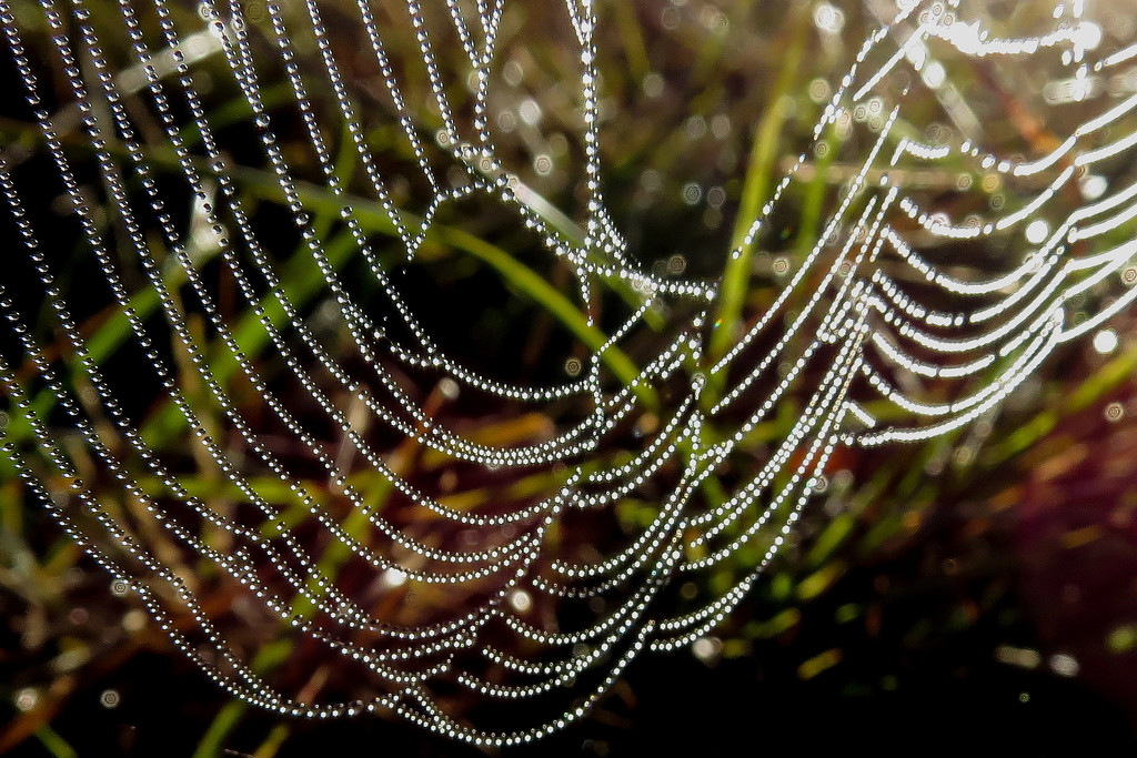 Never Passed Up a Spiderweb Yet by milaniet