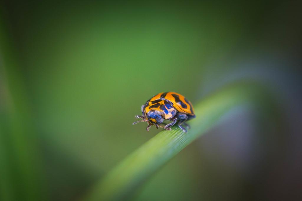 Ladybird by jodies