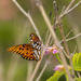 Florida Butterfly by dridsdale