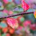 Garden Leaf by dorsethelen