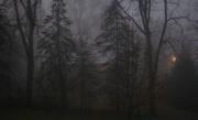 17th Nov 2016 - Foggy morning